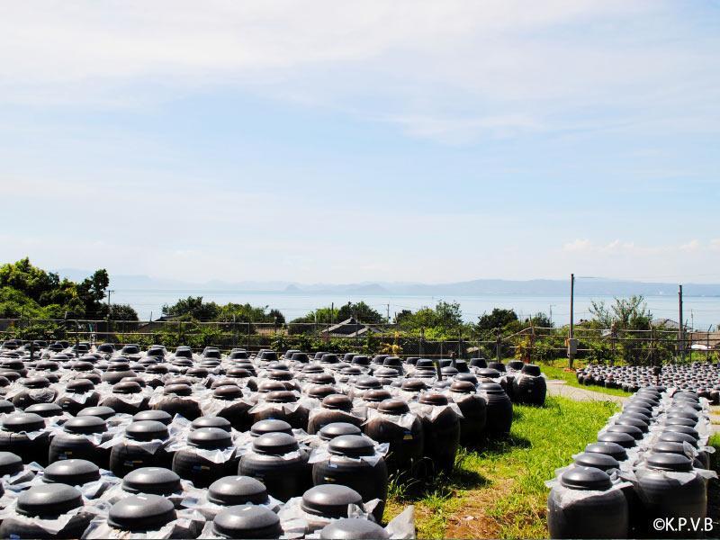 鹿児島観光スポット 黒酢壺畑