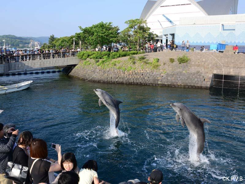 鹿児島 観光スポット いおワールド鹿児島水族館