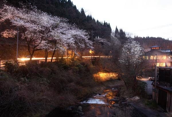 黒川温泉 春 夜桜
