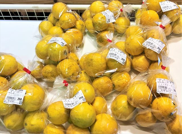 志賀島 サマーオレンジ 宝来柑