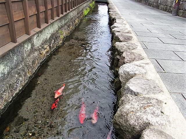 島原 観光スポット 鯉の泳ぐまち