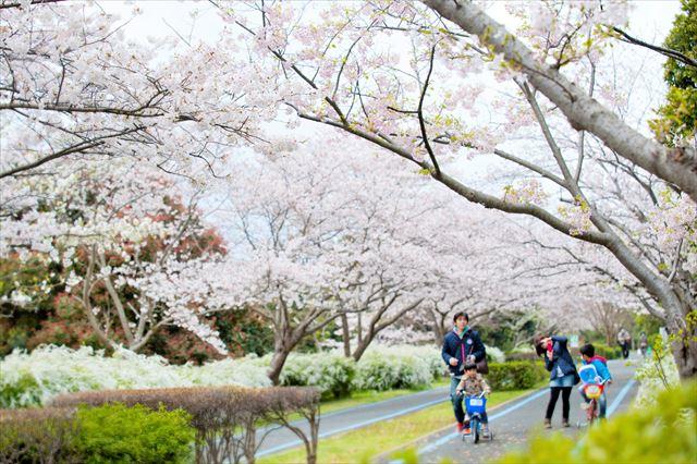 海の中道海浜公園 桜