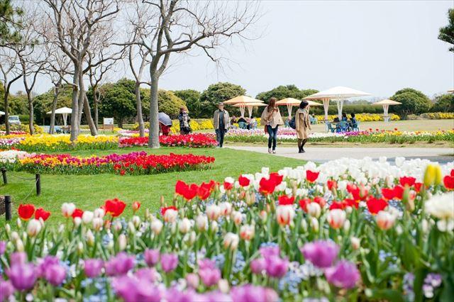 海の中道海浜公園 お花