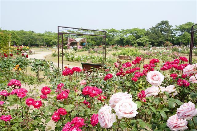 海の中道海浜公園 花
