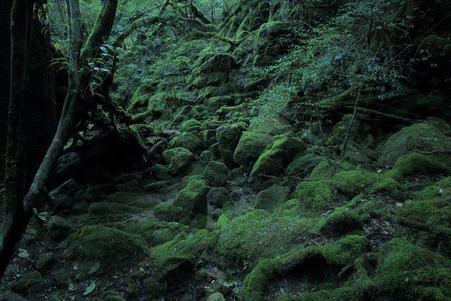 屋久島 もののけの森 苔むす森