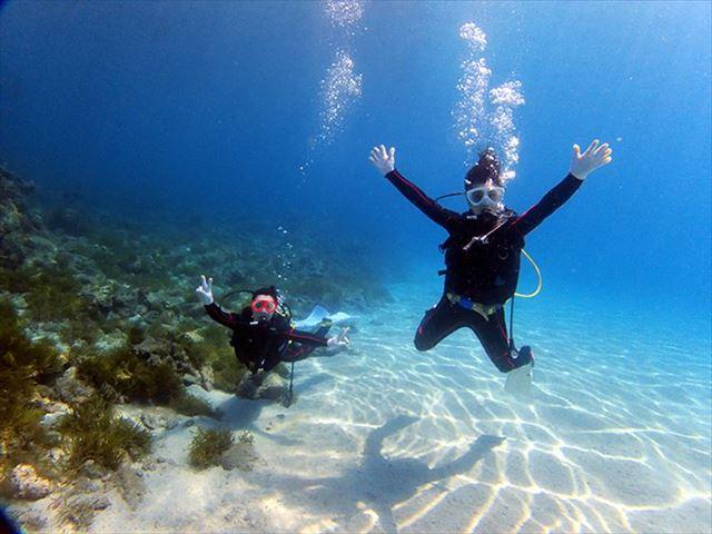 屋久島 観光スポット ダイビング