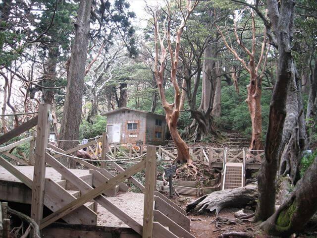 縄文杉の近くにある高塚小屋。ヤクスギとヒメシャラの森に囲まれている。